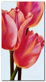 Four Tulips plakat obraz 45x80cm