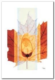 Seasons IV plakat obraz 45x65cm
