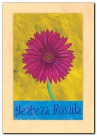 Gerbera Rosula plakat obraz 50x70cm (1)