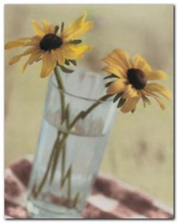 Susans In Glass plakat obraz 40x50cm (1)