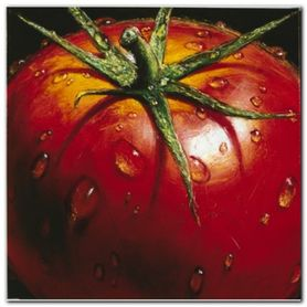 Tomato plakat obraz 50x50cm
