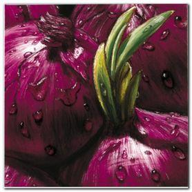 Onions plakat obraz 50x50cm