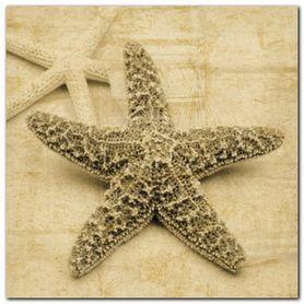 Starfish plakat obraz 50x50cm