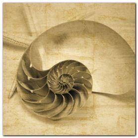 Chambered Nautilus plakat obraz 50x50cm
