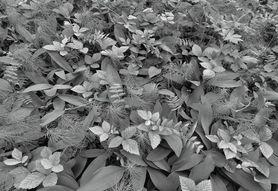 FOREST FLOOR fototapeta 368x254cm
