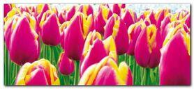 Tulips plakat obraz 50x23cm