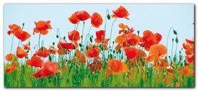 Poppy Field plakat obraz 50x23cm