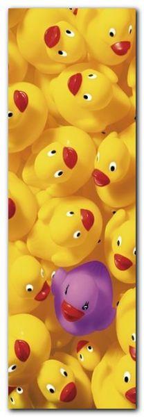 Quack Quack II plakat obraz 33x95cm