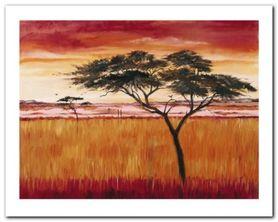 Serengeti Dawn plakat obraz 50x40cm