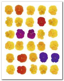 Floral Celebration plakat obraz 40x50cm
