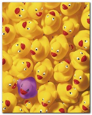 Quack Quack I plakat obraz 40x50cm (1)