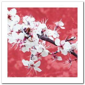 Blossom In Pink plakat obraz 50x50cm