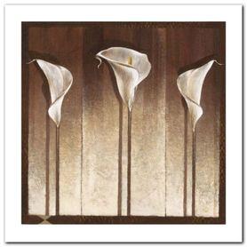 Three Calla Lilies plakat obraz 50x50cm