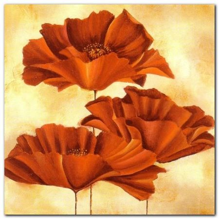 Three Poppies I plakat obraz 50x50cm (1)