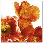 Poppies II plakat obraz 30x30cm (1)