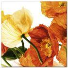 Poppies III plakat obraz 30x30cm (1)