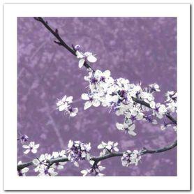 Blossom In Lilac plakat obraz 30x30cm