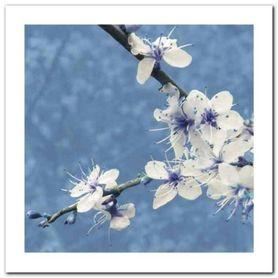 Blossom In Blue plakat obraz 30x30cm