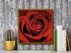 Red Rose plakat obraz 30x30cm (3)