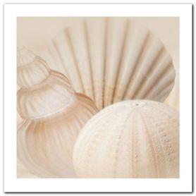 Shells III plakat obraz 30x30cm