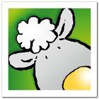 Sheep plakat obraz 30x30cm (1)