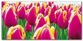 Tulips plakat obraz 100x50cm