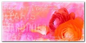 Red Ranuncalus plakat obraz 100x50cm