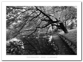 Japanese Garden plakat obraz 80x60cm