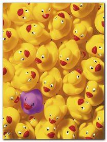 Quack Quack I plakat obraz 60x80cm