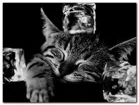Cool Cat II plakat obraz 80x60cm