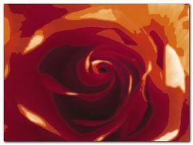 Rose Variation 2 plakat obraz 80x60cm