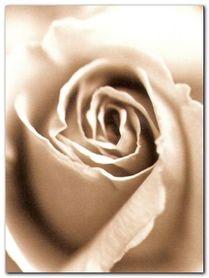 Heart Of The Rose plakat obraz 60x80cm