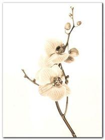 Orchids In Sepia Tones plakat obraz 60x80cm