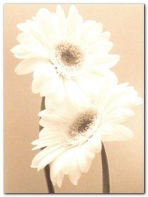 Two Daisies plakat obraz 60x80cm