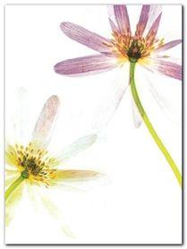 Translucence plakat obraz 60x80cm