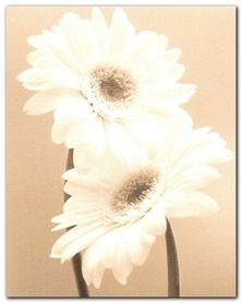 Two Daisies plakat obraz 24x30cm