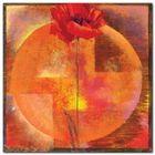 Red Poppy plakat obraz 50x50cm (1)