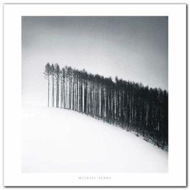Forest Edge plakat obraz 70x70cm