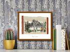 Two Zebras plakat obraz 50x40cm (3)