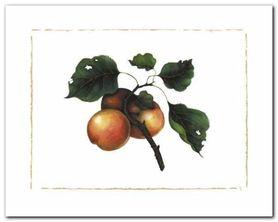 Goldmine Nectarine plakat obraz 50x40cm