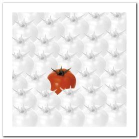 Tomatoes plakat obraz 60x60cm