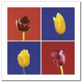 Four Tulips plakat obraz 30x30cm