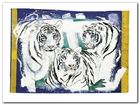 Three White Tigers plakat obraz 80x60cm (1)