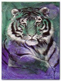 Young Tiger plakat obraz 60x80cm
