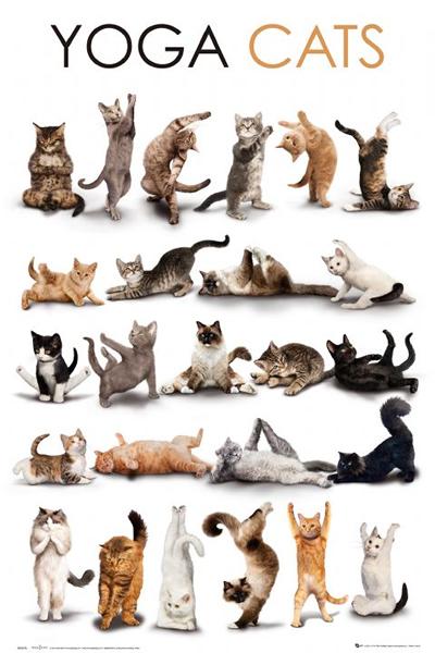 YOGA CATS plakat 61x91cm (1)
